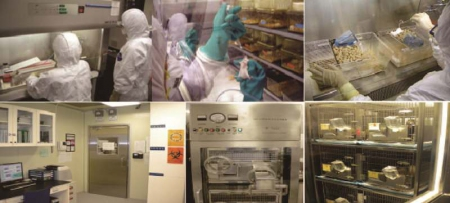 Biosafety_Level-3_laboratory